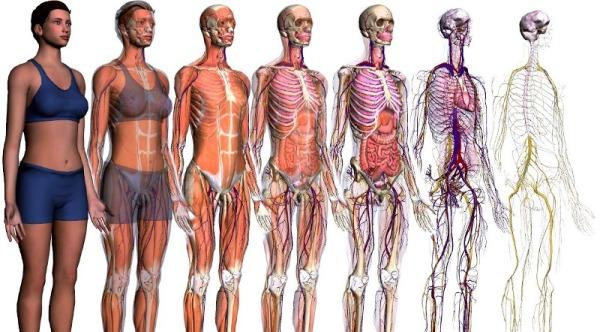 Anatomia-e-fisiologia1