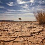 Cambiamenti climatici:  Flavia Bustreo (OMS), fra il 2030 e il 2050 circa 250 000 morti in più ogni anno