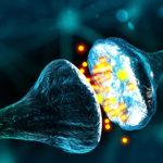 Sinapsi artificiali per la comunicazione neuronale