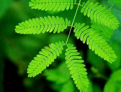Memoria: anche le piante ne hanno una
