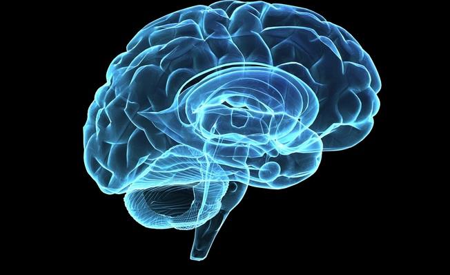 """La psichiatria """"sfida"""" la filosofia dialogando sulla storia e sulle evoluzioni del cervello umano"""