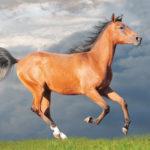 Giugno 2018 Cavallo di terra Yang
